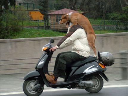 """""""εδώ στρίψε δεξιά.. να! σε αυτό το παρκάκι συχνάζει μια σκυλίτσα.. όλα τα λεφτά!"""""""